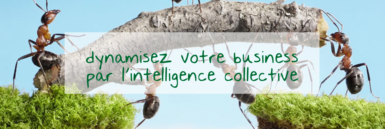 slider-fourmis-texte-1